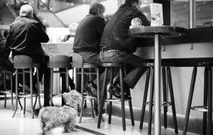 Dog waits for master