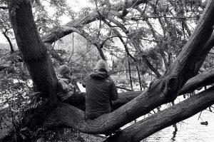 Children in tree